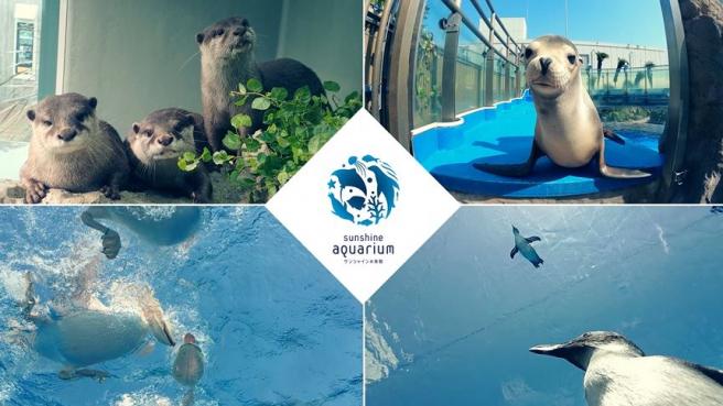 Otters, Seals, and Penguins at Sunshine Aquarium! | Ikebukuro, Tokyo | #seeyousoonjapan