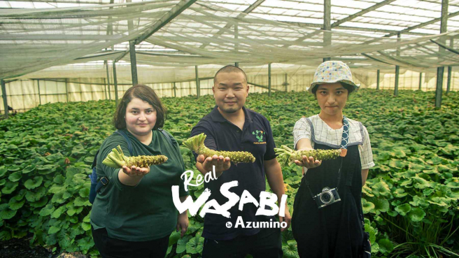 The Story of Real Japanese Wasabi in Azumino, Nagano: From Farm to Fine Dining