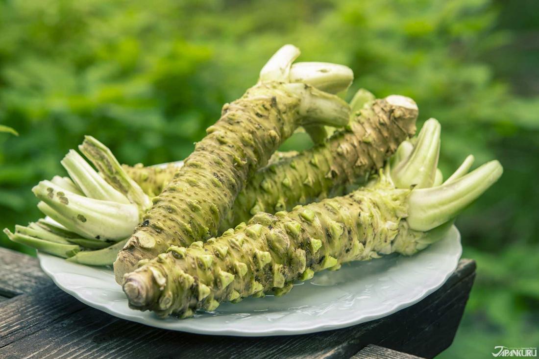 從安曇野山葵 看日本料理經典調味料真「哇沙米」72變