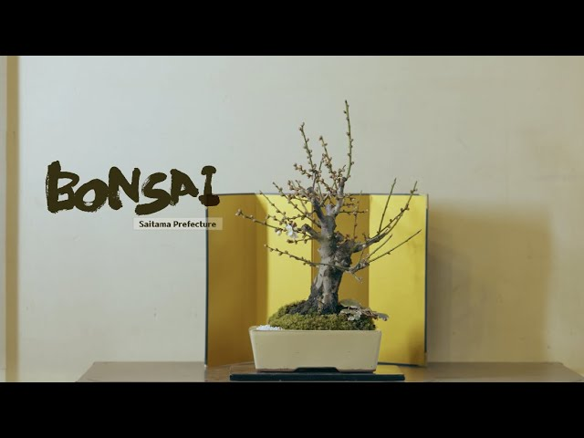 Create Your Own Little World of Little Bonsai Trees in Saitama