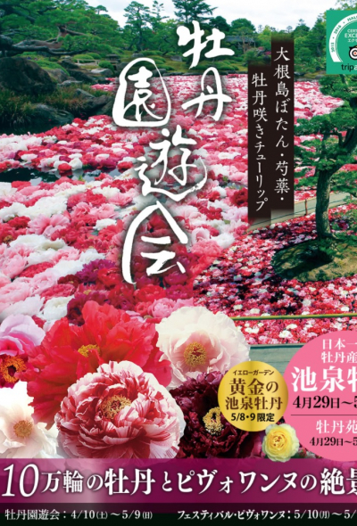 Floating Peonies and Peony Paths at Yuushien Garden (Shimane)