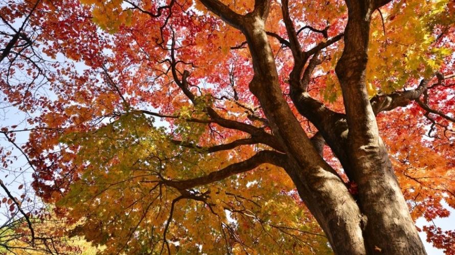 札幌冬季拍照景點!中島公園篇