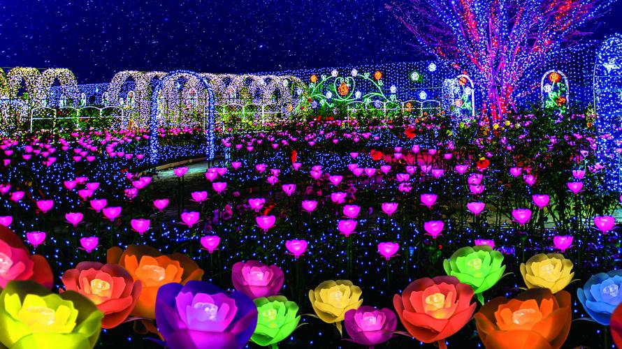 影片介绍 - 足利花卉公园 光之花庭园