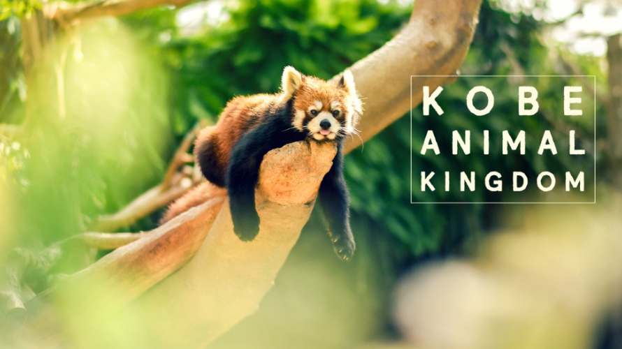 Kobe Animal Kingdom | Spend a Day in Kobe with Animals from Around the World