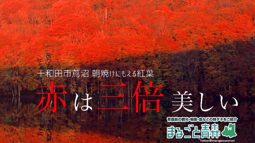 일본 동북지역 가을여행! 아오모리에서 제일 아름다운 단풍스폿