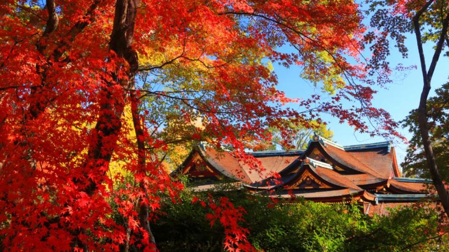 【2019日本全國紅葉特集】關西 - 京都人氣景點北野天滿宮
