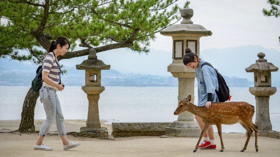 【2019日本全國紅葉特集】中國 - 小鹿配上紅葉的宮島