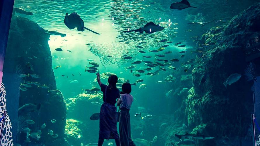 L'aquarium d'Enoshima: Entrez dans le monde merveilleux des méduses