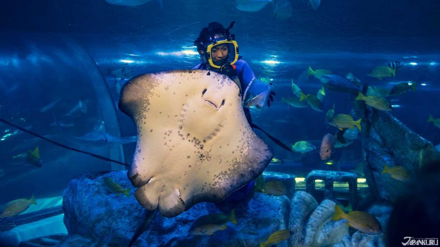 Đến Thăm Thủy Cung Shinagawa - Kết Bạn Với Những Chú Cá Dễ Thương ở Tokyo