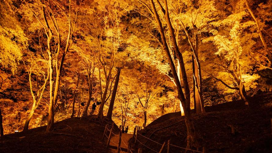 日本重量級紅葉賞楓名所香嵐溪:滿山楓林紅勝火  白日如畫夜迷幻