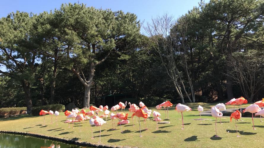 후쿠오카 가볼만한곳! 우미노나카미치 해변공원!