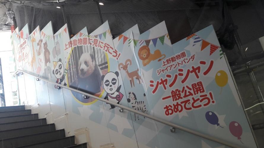일본인이 판다를 좋아하는 이유! (ft.판다 캐릭터)