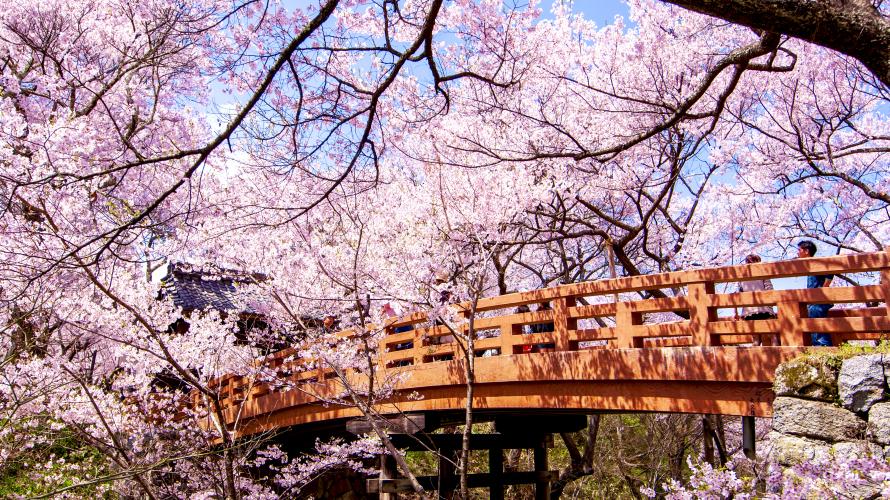 Nagano và Niigata -  Thiên đường ngàn hoa cùng những ngày du xuân tại Nhật Bản
