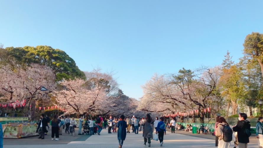 สวนอุเอโนะ ซากุระ และโควิท