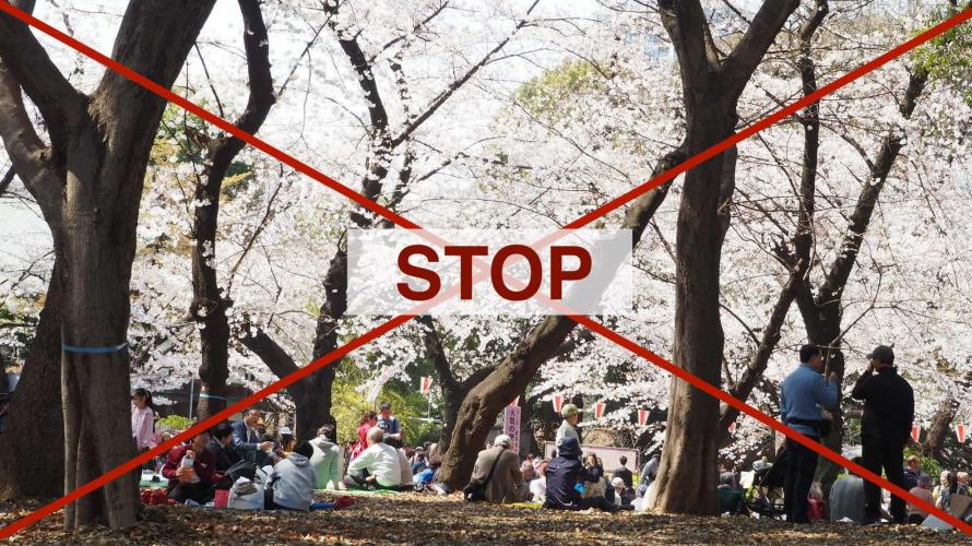 當日本櫻花季遇上新型肺炎  2020年在家賞櫻的N種方法(文廢慎入)