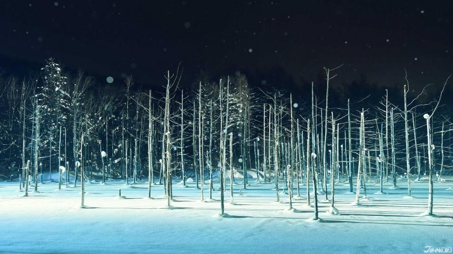 北海道 美瑛の絶景 青い池