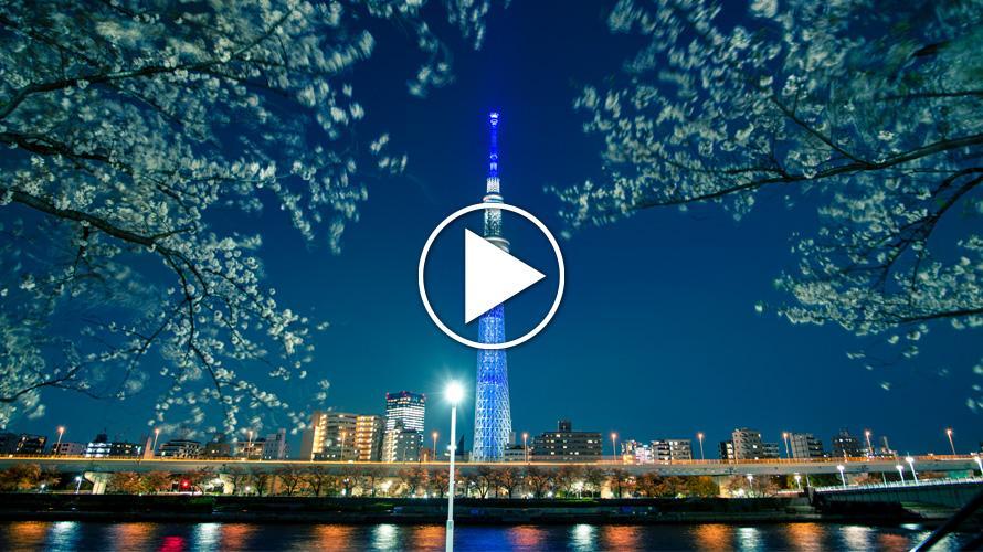 TOKYO SKYTREE và hoa anh đào – Cho ngày xuân hoàn hảo ở Tokyo
