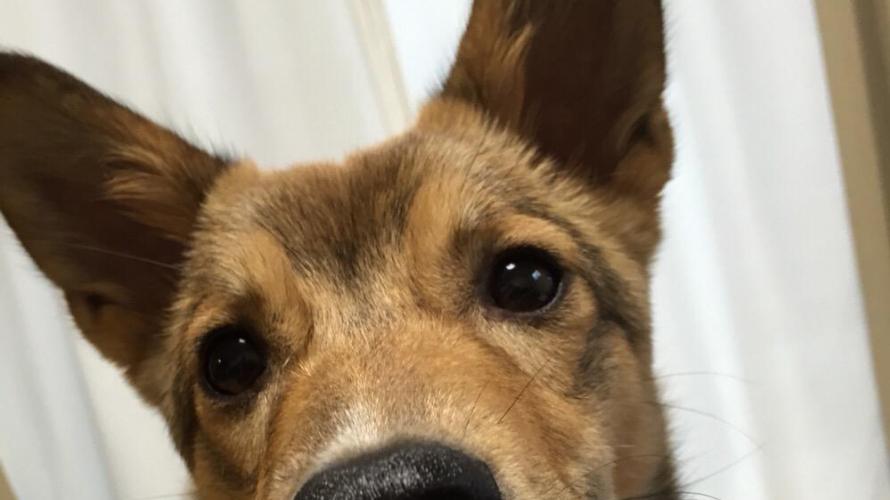 私(犬)の名前は「HARU(はる)」です。