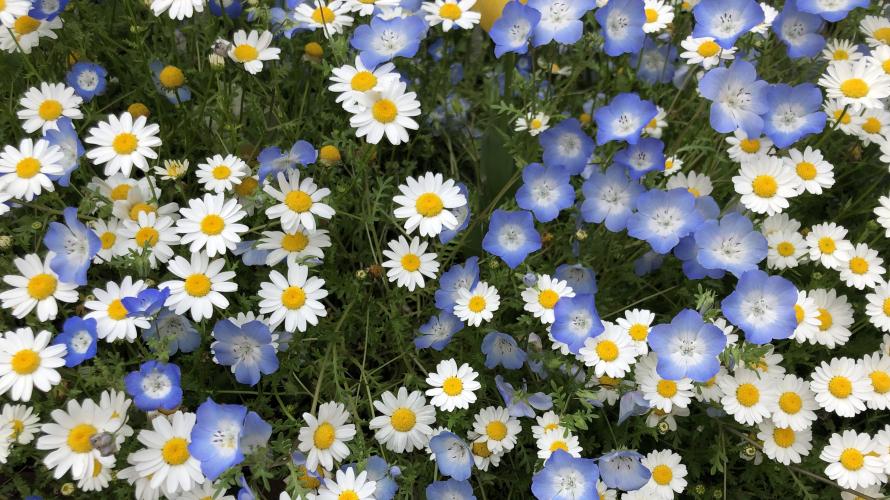 hananona app จำแนกชนิดดอกไม้ด้วย AI