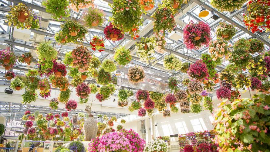 le Hana-Biyori de Yomiuriland propose des fleurs, des projections vidéos, des loutres et...