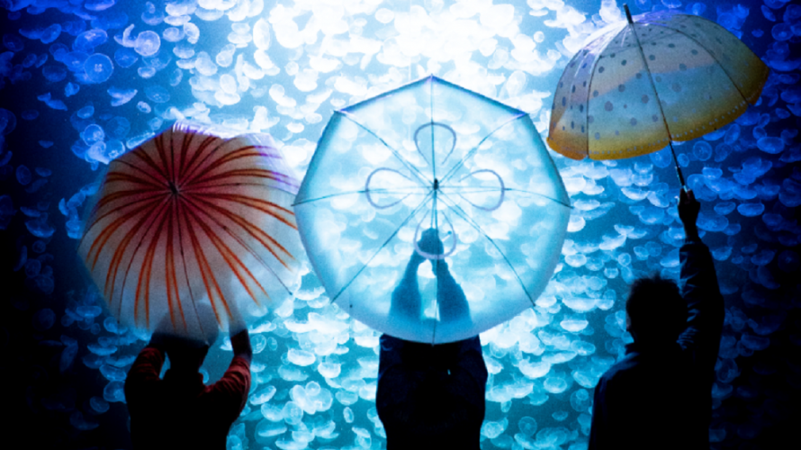 5 Best Umbrellas for Surviving Rainy Season in Japan