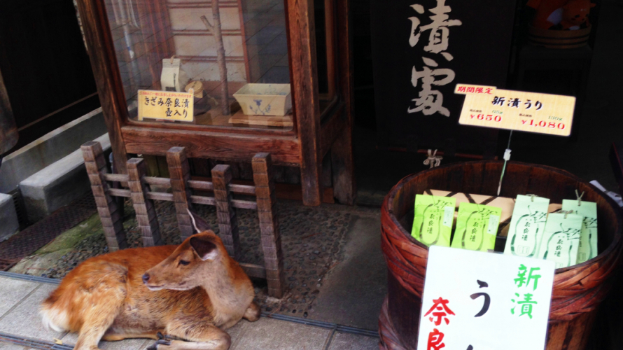 Spend a Day with the Deer of Nara Park