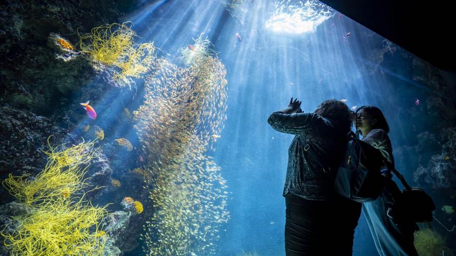 [특집: Do you Know 'Joban fish'?] Ep04. 후쿠시마 현 이와키 시의 어업과 해산물의 지금 그리고 안전성