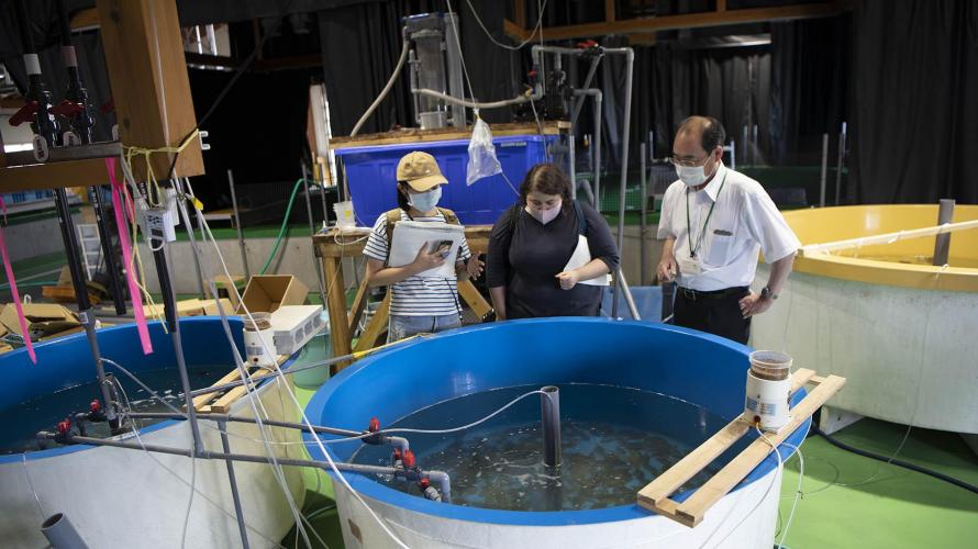 【日本极上美食之常磐海产特辑】08 福岛水产资源研究 守护常磐海产的未来