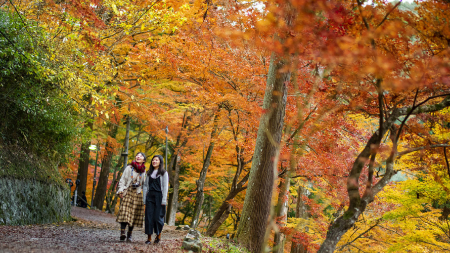 "What Is ""Koyo""? ・ Japan's Most Important Autumn Tradition"