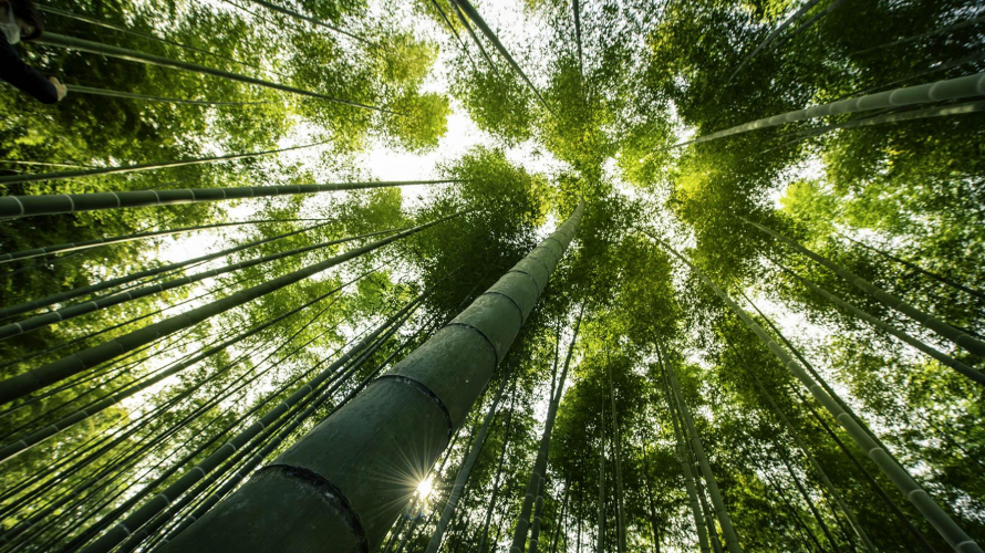 ป่าไผ่ Wakayama Farm โลเคชั่นถ่ายหนังลับๆ นอกโตเกียว