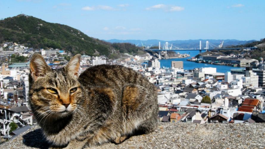 뱃길따라 떠나는 세토우치 여행 - 히로시마와 에히메의 추천관광지&루트