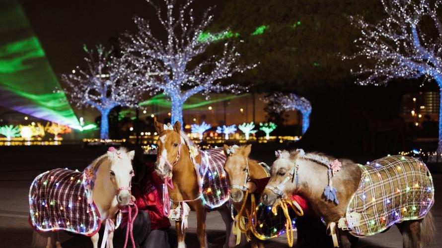 2021-2022東京冬季點燈:大井競馬場TOKYO MEGA Illumination 馬、光與影共演的遊樂園