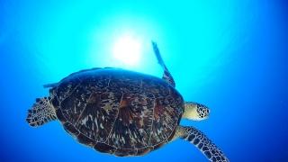 走!!跟我們到蔚藍的沖繩海岸浮淺去