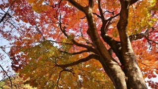 Autumn Foliage Season in Sapporo is Already Over !!!