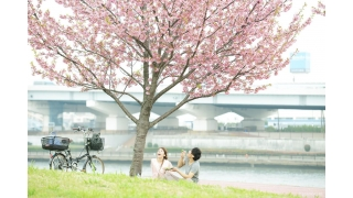 Have a date this spring! Cherry blossom viewing journey in Japan!