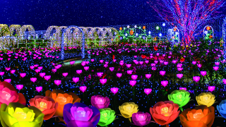 New Video!  Ashikaga Flower Park! Largest Winter Illumination Event in Kanto!