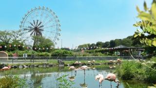 去東京近郊的東武動物公園看白虎!
