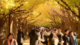 도쿄 도심 속 단풍 명소