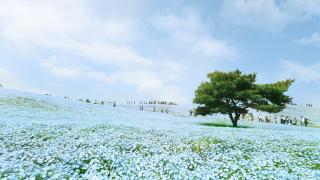 芝櫻玫瑰粉蝶花  東京近郊的踏青賞花一日遊公園3選