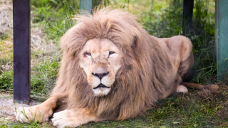 Get Up and Close to Ferocious Animals at Nasu Safari Park in Japan🦁