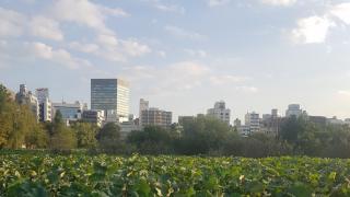 [도쿄 놀거리] 우에노 공원에 가다!