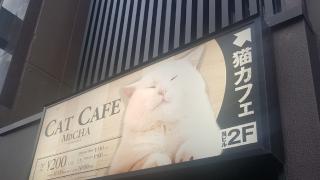 [도쿄 놀거리] 고양이 카페 MOCHA in 아키하바라