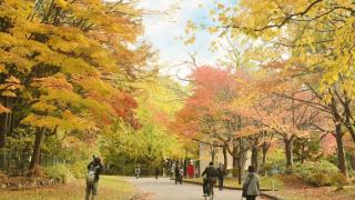 人氣賞楓景點大公開!