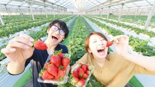 일본인들은 딸기를 왜이렇게 좋아할까? 일본 딸기가 유명한 이유