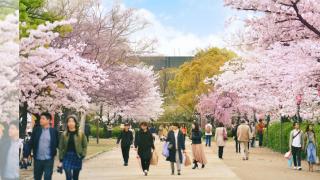 3月日本旅遊天氣氣象小筆記:春季不只有賞櫻!