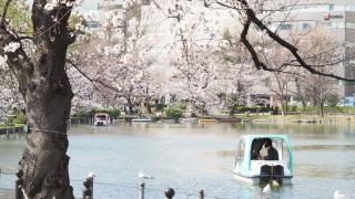 上野恩賜公園賞櫻女子旅之私景推薦:不忍池不只美在夏天