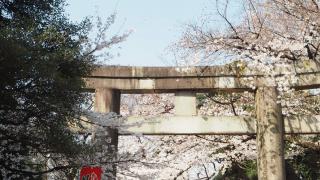 上野恩賜公園賞櫻女子旅之私景推薦:東照宮參道上的櫻花屋台