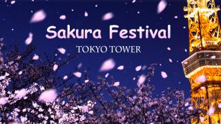 도쿄여행 필독! 도쿄타워 가는 법&입장료&층별 소개 (+원피스 테마파크, 벚꽃행사)