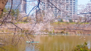 이다바시-카구라자카에서 벚꽃놀이하고 먹방! (+캐널카페)