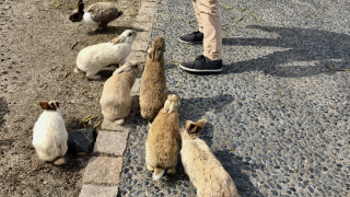 Cuddle with the Bunnies on Japan's Rabbit Island, Okunoshima
